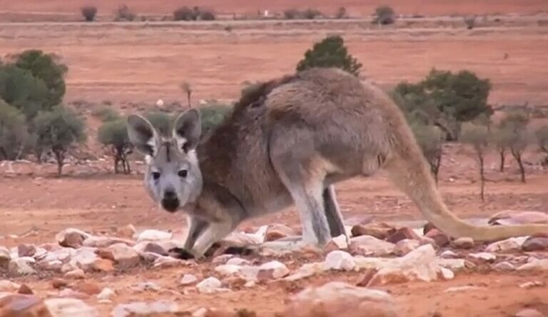 Ein Jahr Australien