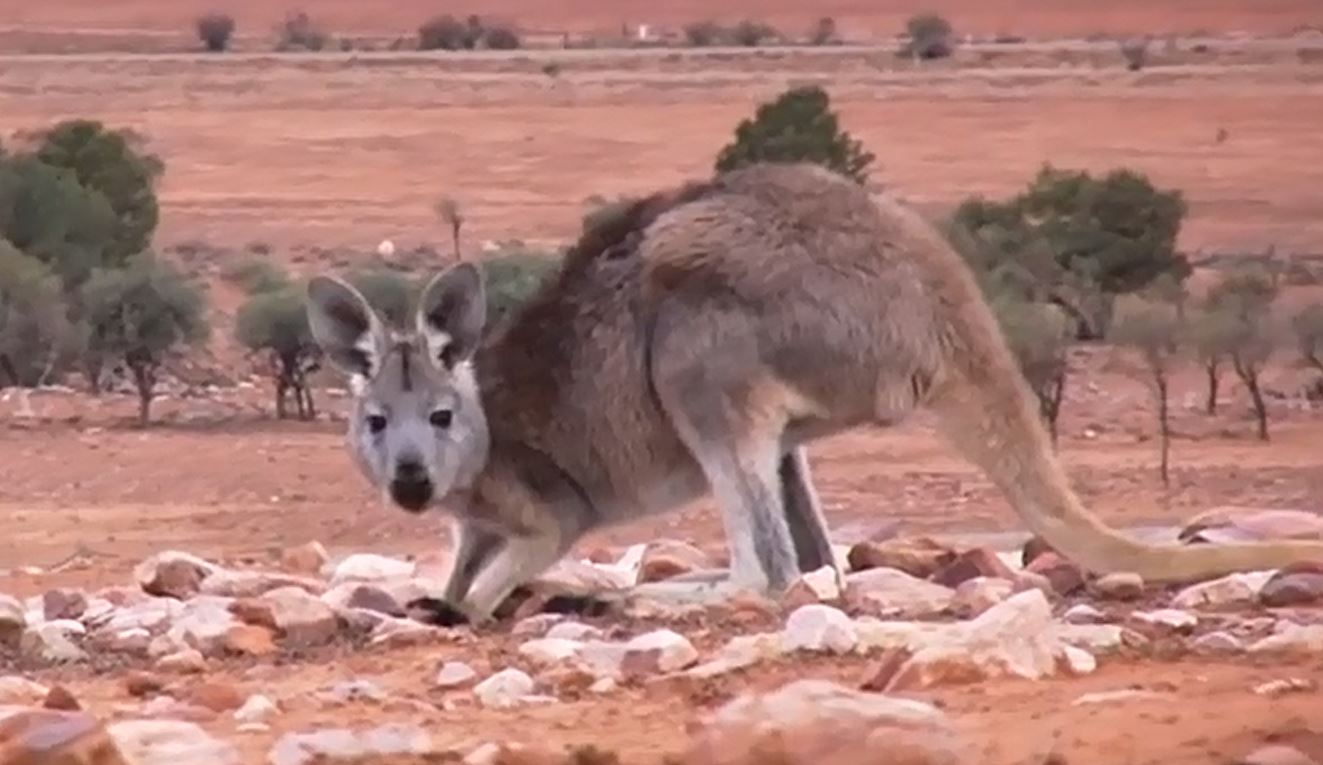 Australien Video