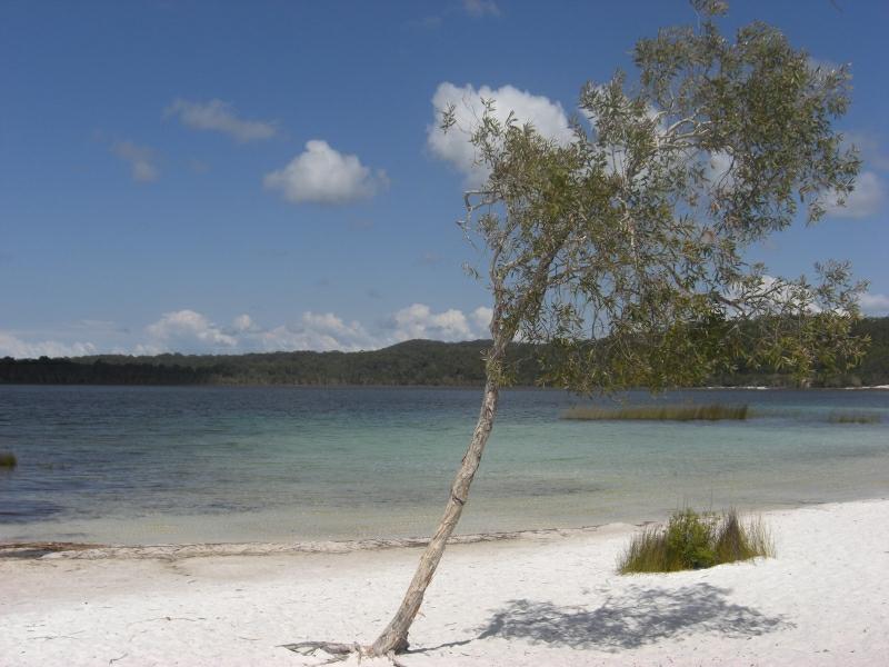 Fraser Island 1916