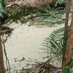 Fraser Island 9300143
