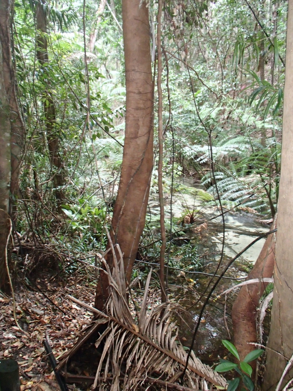 Fraser Island 9300145