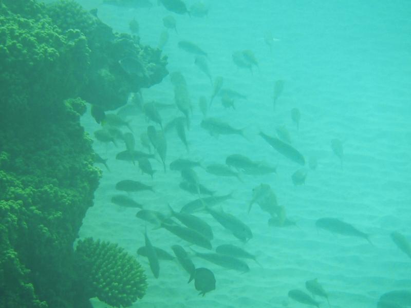 nacula island yasawa fidschi A040203