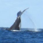 Byron Bay 01