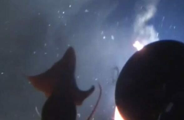 Riesenkrake greift Greenpeace U Boot