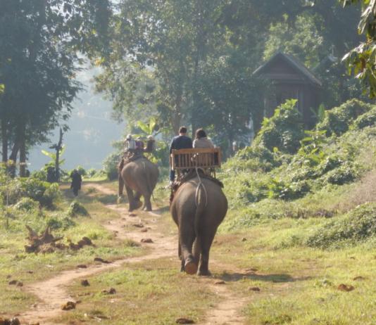 Elefantenfuehrer Laos Luang Prabang Elefanten Camp