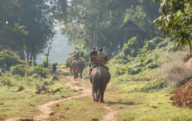 Ein Tag als Elefantenführer in Laos (Luang Prabang)