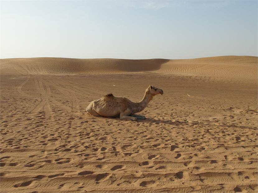 Dubai 1453