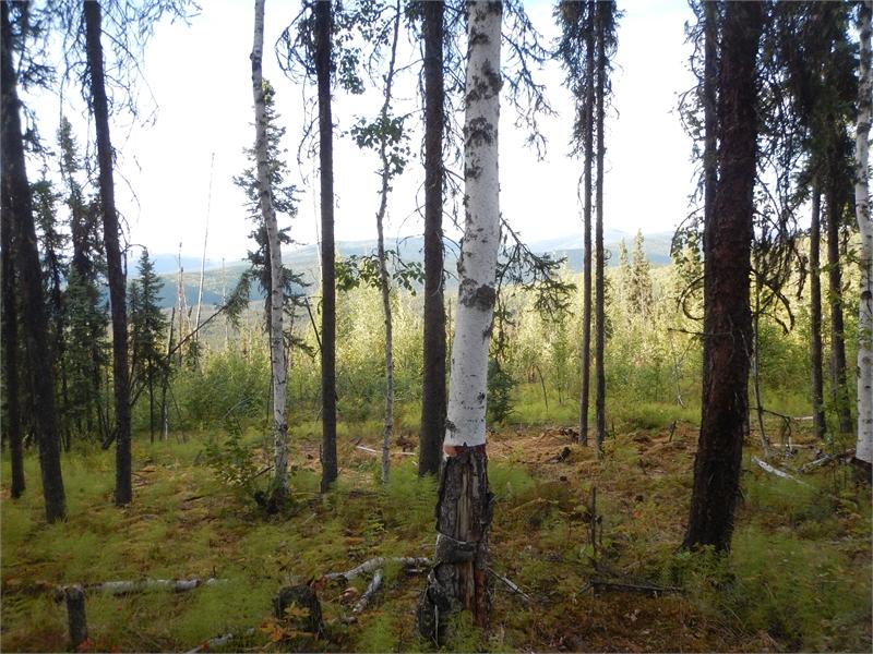 Fairbanks ATV Tour 062304 1269
