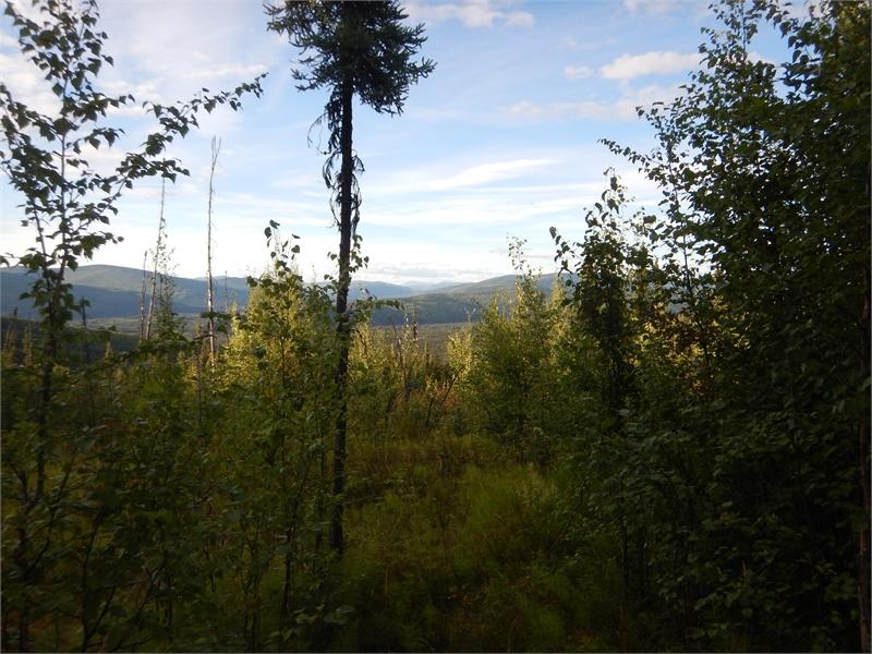 Fairbanks ATV Tour 062506 1273