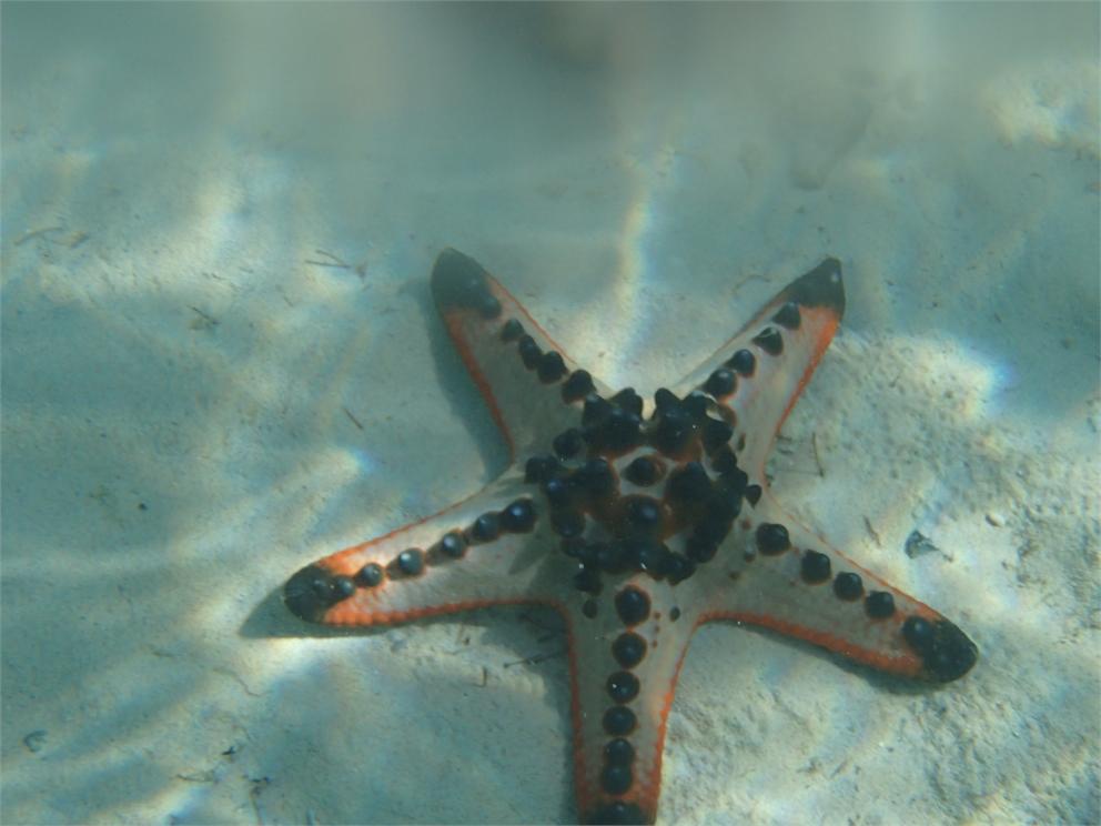 Palawan Strand Schnorcheln 2060108