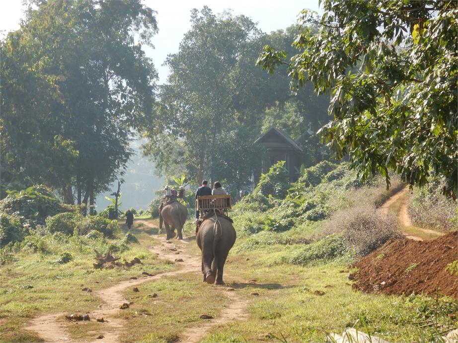 laos luang prabang elefanten 0007