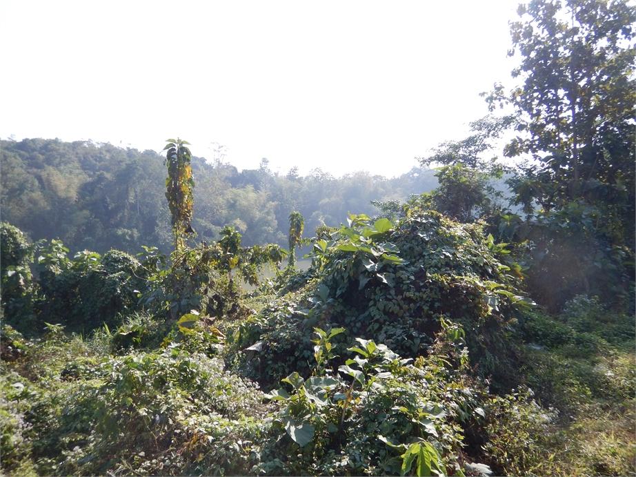 laos luang prabang elefanten 0009