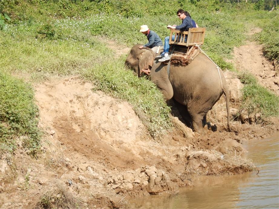 laos luang prabang elefanten 0033