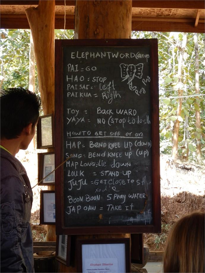 laos luang prabang elefanten 0040 e1425028423729