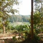 laos luang prabang elefanten 0049