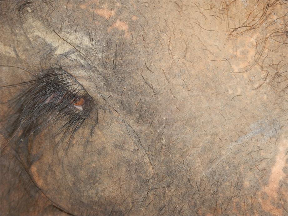 laos luang prabang elefanten 0056