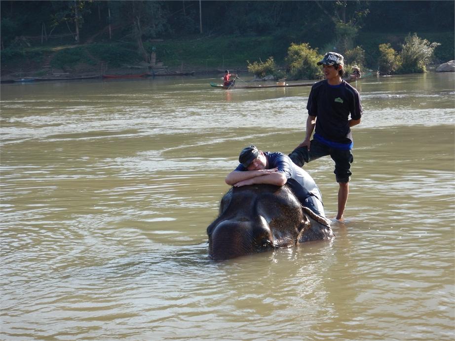 laos luang prabang elefanten 0066