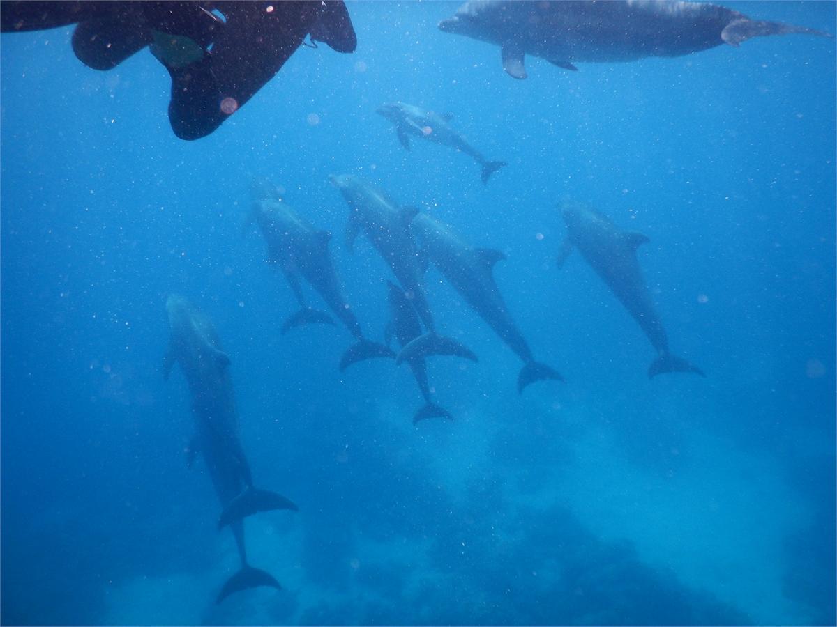 Schwimmen mit Delfinen Hurghada 1948