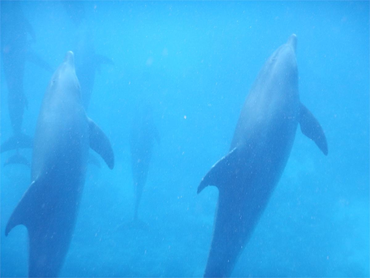 Schwimmen mit Delfinen Hurghada 1954