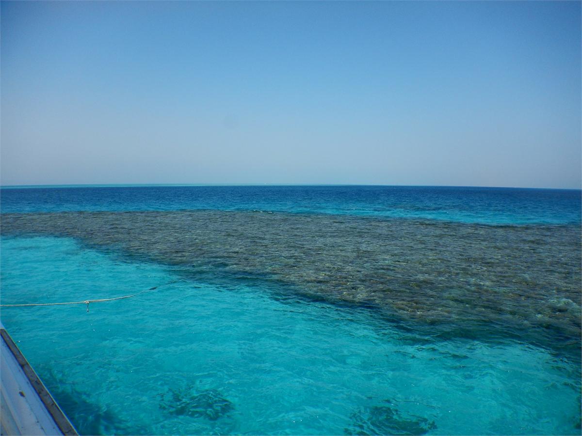 Schwimmen mit Delfinen Hurghada 1964