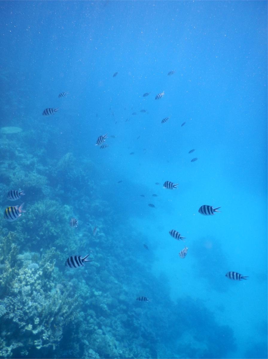 Schwimmen mit Delfinen Hurghada 1984