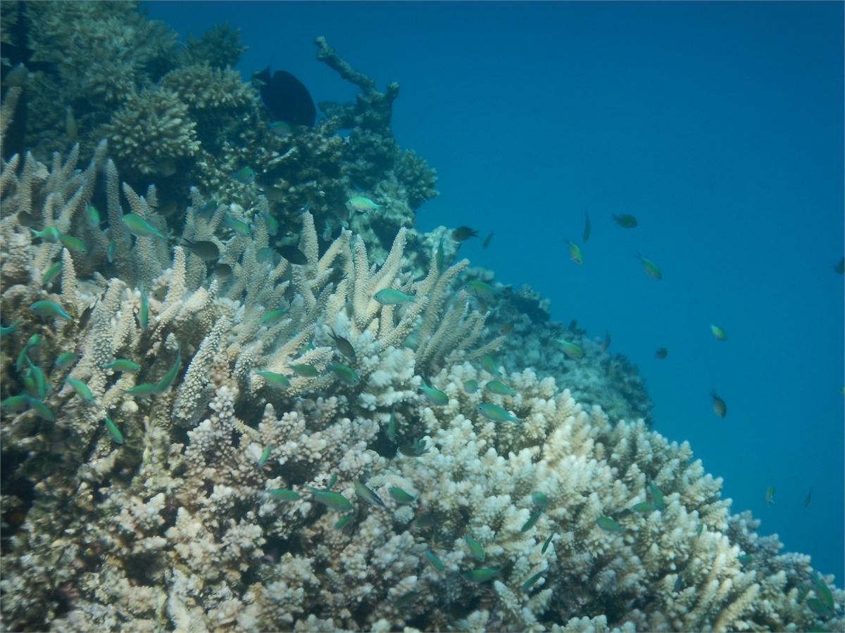 Schwimmen mit Delfinen Hurghada 2013