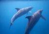 Schwimmen mit Delfinen Hurghada Titel