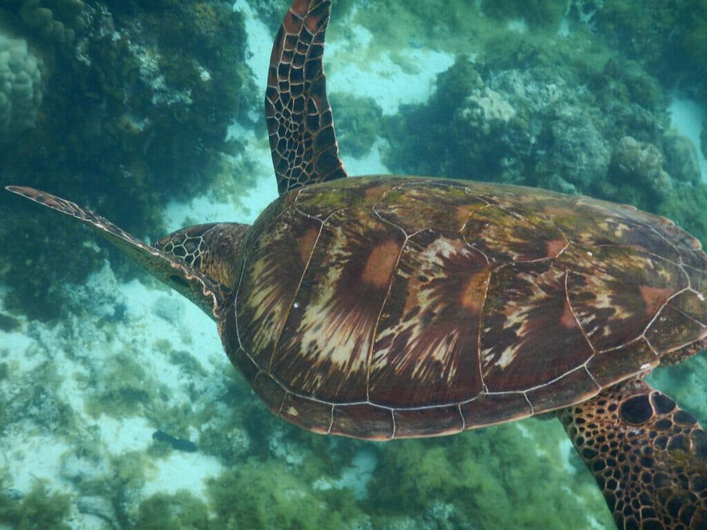 Apo Island Philippinen