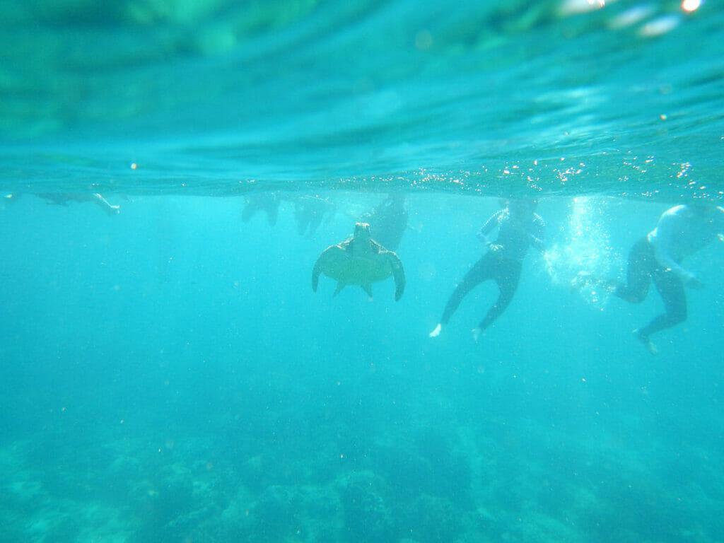 Apo Island Philippinen Schnorchler Wasser