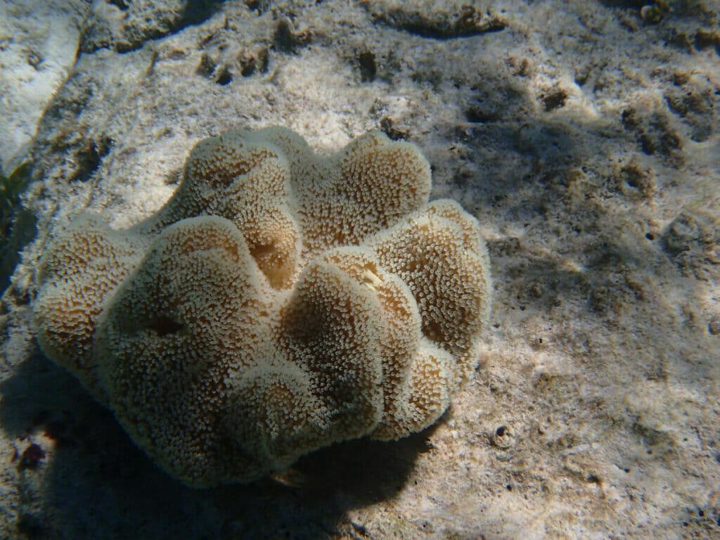 Cebu Philippinen Korallen