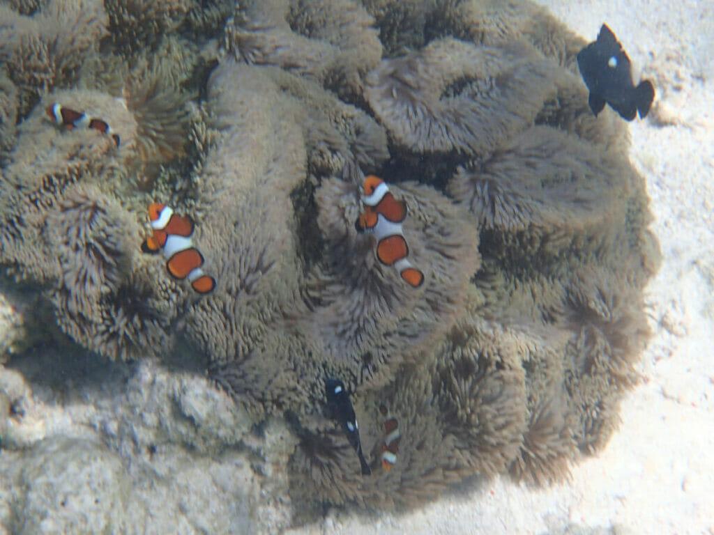 Cebu Philippinen Schnorcheln