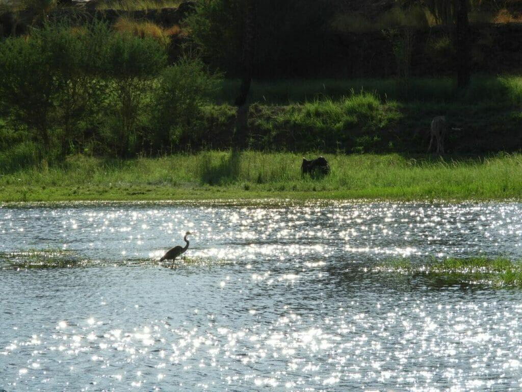 Natur am Nil