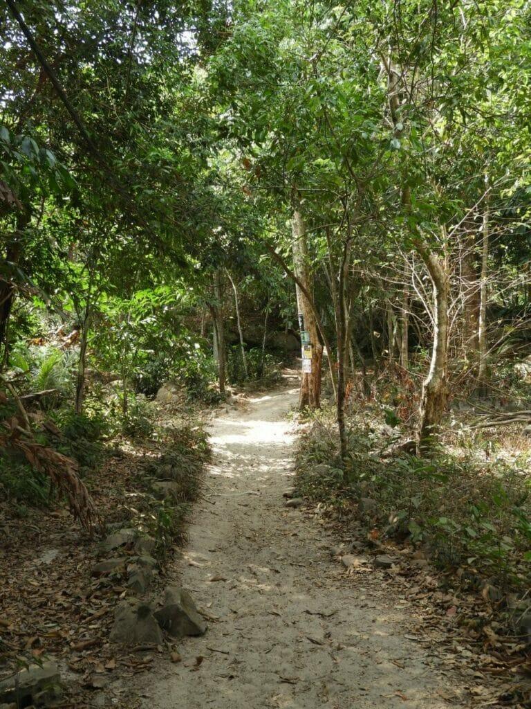 Durch den Dschungel zum nächsten Strand