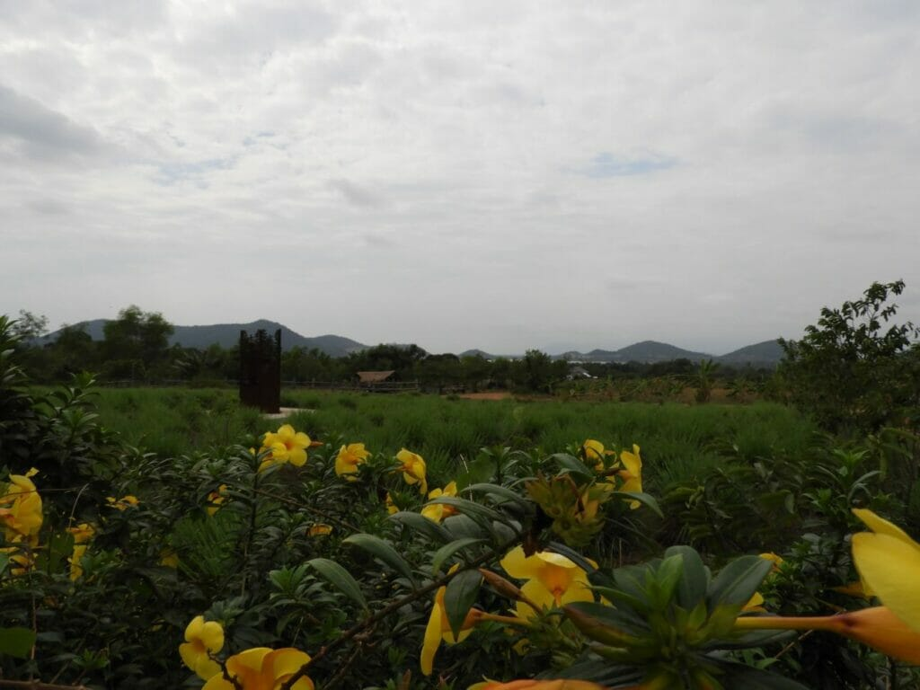 Kampot Pfefferfarm