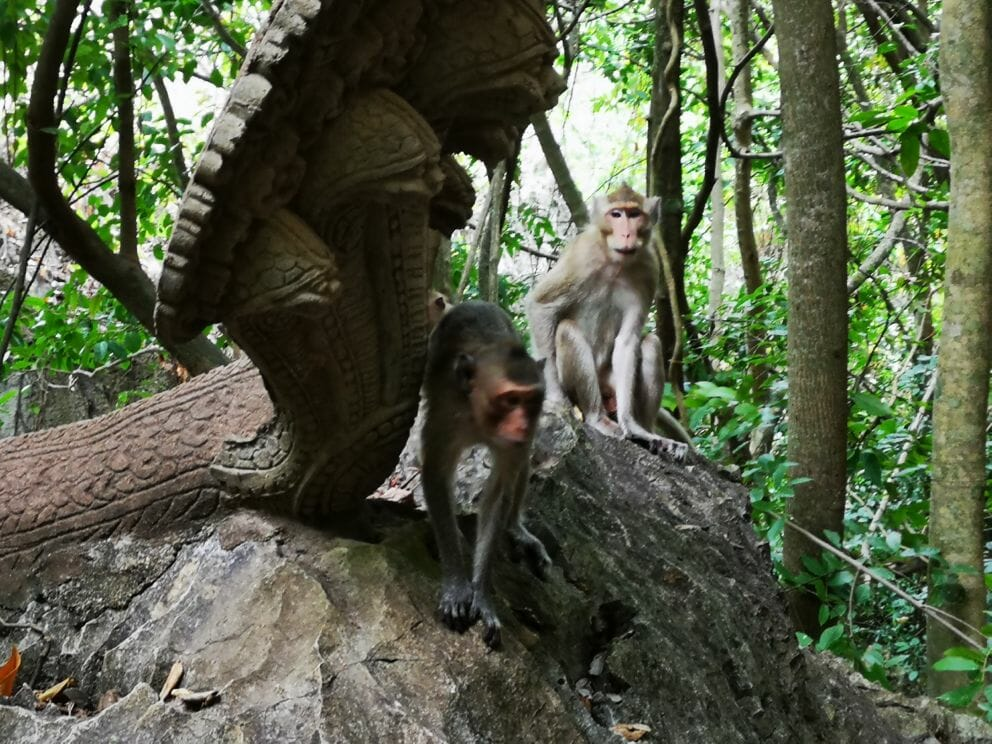 Affen beim Tempel