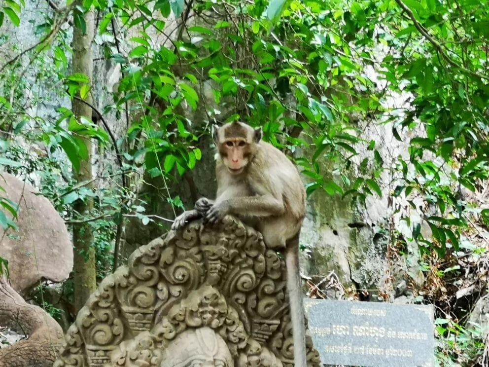 Affe beim Tempel