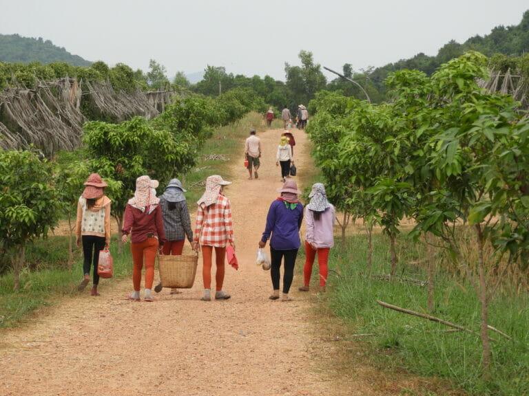 Kampot und Kep: Ausflug im ländlichen Kambodscha
